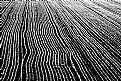 Picture Title - cornfield