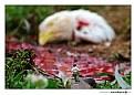Picture Title - ..::Massacre::..