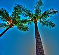 Picture Title - palms