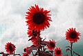 Picture Title - sun2