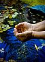 Picture Title - Aqua Fugit