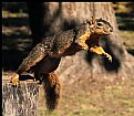 Picture Title - Squirrel