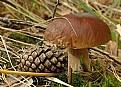 Picture Title - White mushroom.