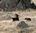 Picture Title - The Bears