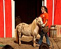 """Picture Title - """"Shetland Pony"""""""