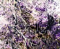 Picture Title - Abstractus