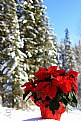 Picture Title - Joyeux Noel