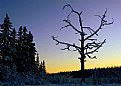 Picture Title - Over the Moose Swamp