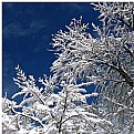 Picture Title - Snow wafter