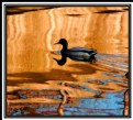 Picture Title - Duck Kwak Atumnal Reflection.