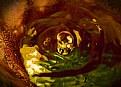 Picture Title - bubbles