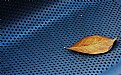 Picture Title - A leaf on blue