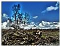 Picture Title - Sutton Park