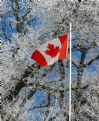 Picture Title - Canada!