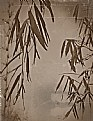 Picture Title - bamboo