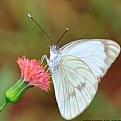 Picture Title - la mirada de papallona
