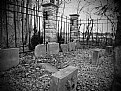 Picture Title - Dog Cemetery