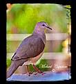 Picture Title - dove
