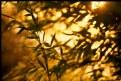 Picture Title - Hello, sunshine