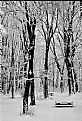 Picture Title - Winter