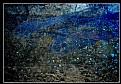 Picture Title - BLUE RAIN