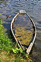 Picture Title - When nature appropriates