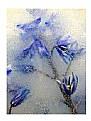 - Flowers & Ice -