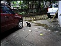 Picture Title - Cat & Cars