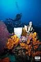Picture Title - Sponges