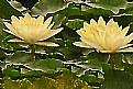 Picture Title - Solar plants