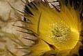 Picture Title - a little cactus flower