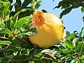Picture Title - seasonal fruit