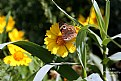 Picture Title - Butterfly 2