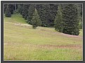 Picture Title - Alpine Meadow 2