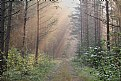 Picture Title - Morning in forest