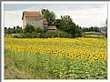 Picture Title - Provence impression