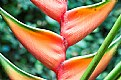 Picture Title - riqui riqui