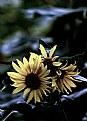 Picture Title - Malinconico autunno
