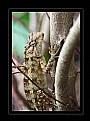 Picture Title - Lizard III