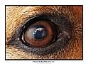 Picture Title - Eye eye!