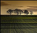 Picture Title - line of trees looking towards Hampeth