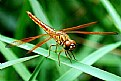 Picture Title - Dragon Fly