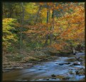 Picture Title - Fall Colors