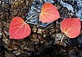 Picture Title - autumn leaves