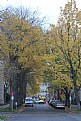 Picture Title - Yellow Trees