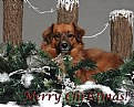 """Picture Title - """"Merry Christmas"""""""