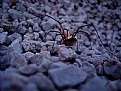 Picture Title - Spider