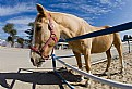Picture Title - Horse