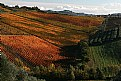 Picture Title - Vineyard in autumn 3