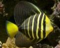 Picture Title - Marine Aquarium 3
